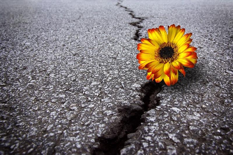 Je veerkracht ontwikkelen
