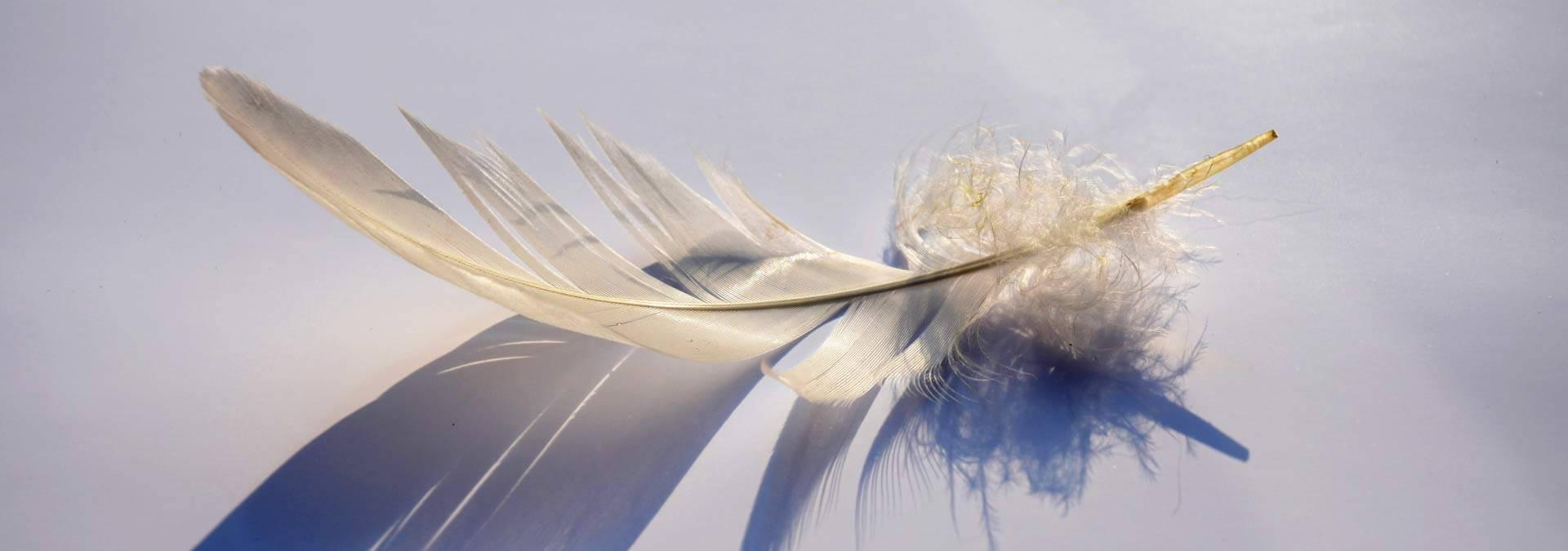 spreuken en wijsheden leven Spreuken over loslaten voor een Lichter Leven   Hét  spreuken en wijsheden leven