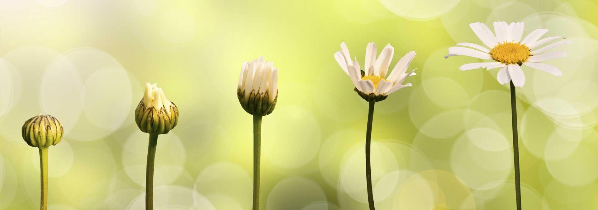De mooiste spreuken over persoonlijke ontwikkeling en quotes over persoonlijke groei van ingspire