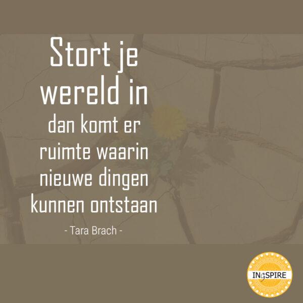 Quote Tara Brach: Stort je wereld in, dan komt er ruimte waarin nieuwe dingen kunnen ontstaan | ingspire.nl